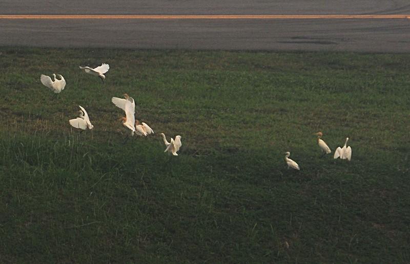 apr 01 1223 changi birds