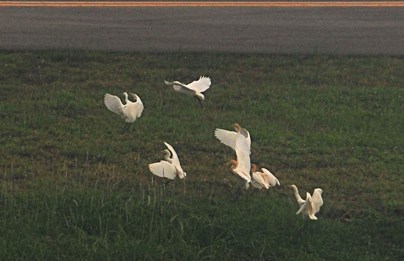 apr 01 1223 changi birds close