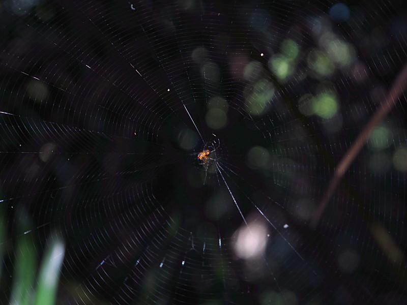 apr 01 4290 spider