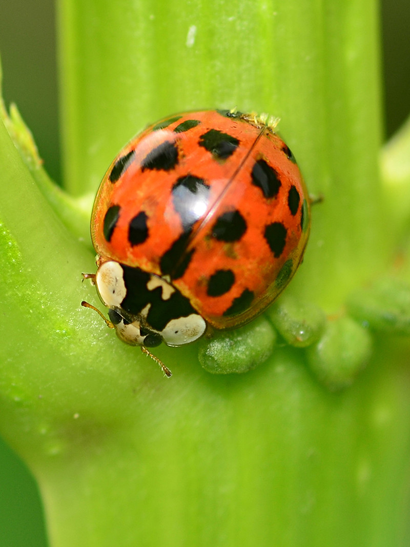 apr 04 0385 ladybug