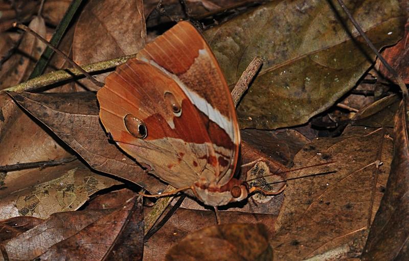 apr 04 5101 lao butterfly