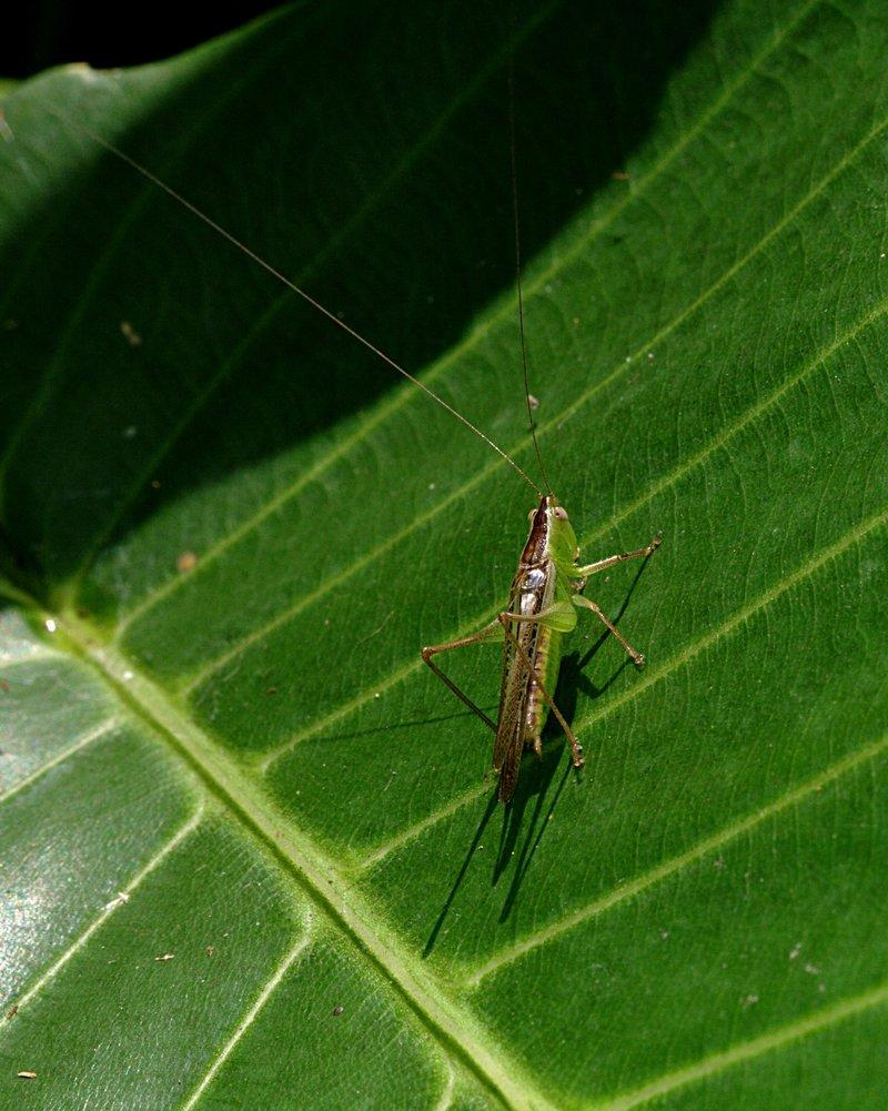 apr 06 2593 grasshopper