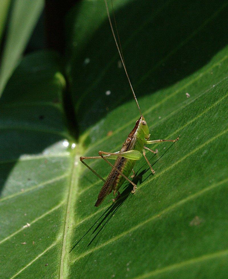 apr 06 2601 grasshopper