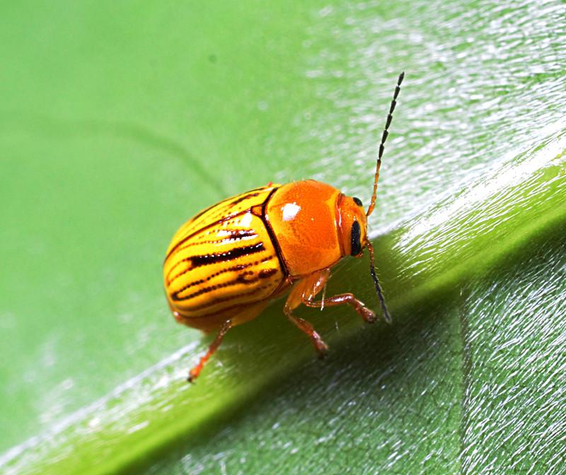 apr 08 6242 yellow ladybug
