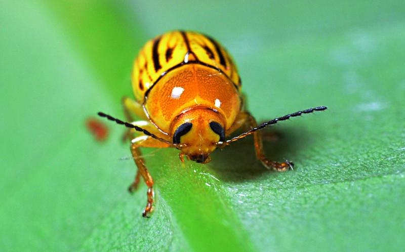 apr 08 6254 yellow ladybug