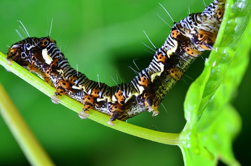 apr 08 6276 caterpillar