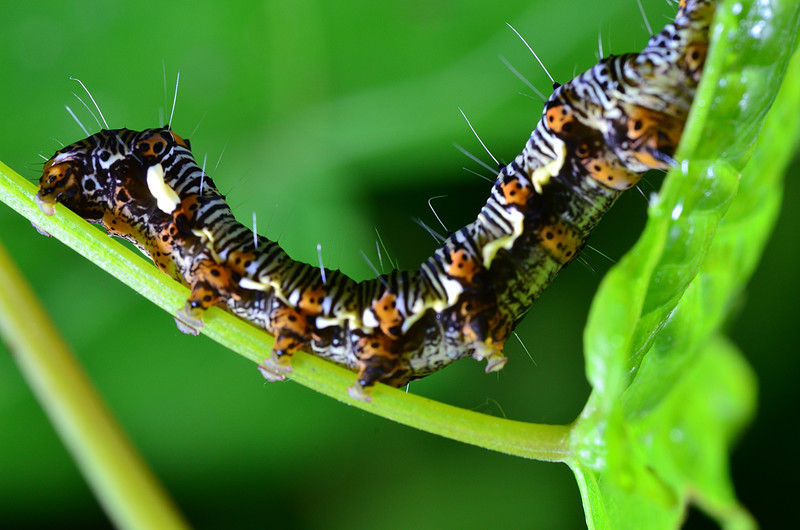 apr 08 6277 caterpillar