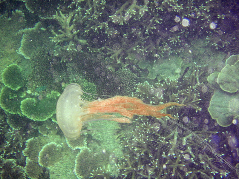 apr 11 0221 jelly fish