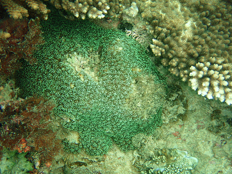 Green Coral Resort Room Rates
