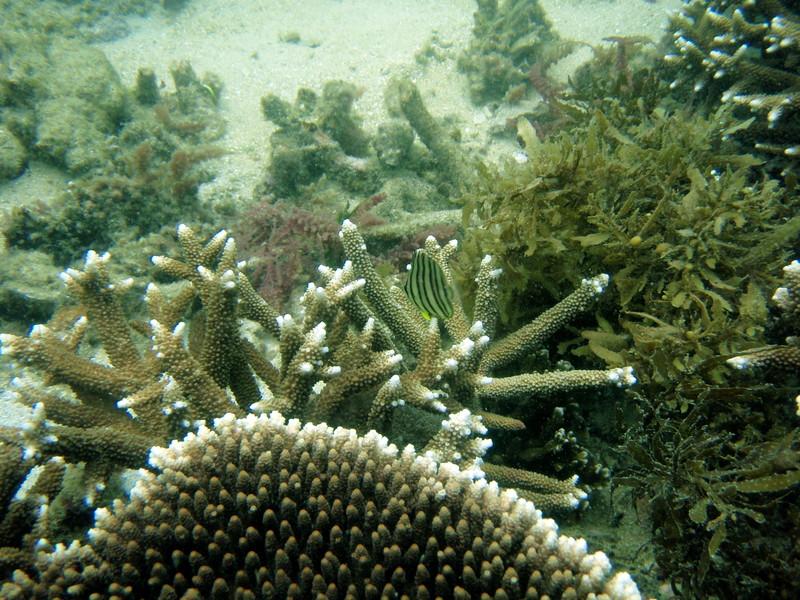 apr 11 0268 coral fish