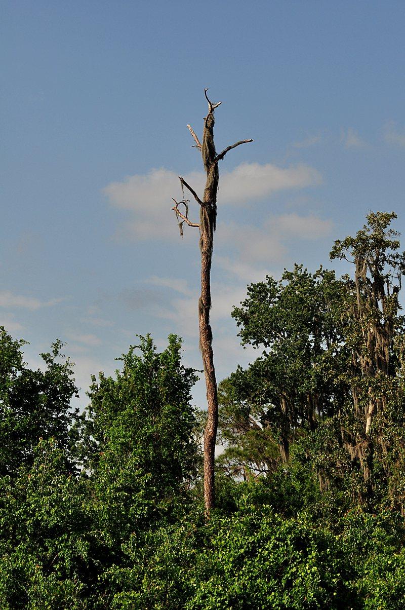 apr 11 7958 tree