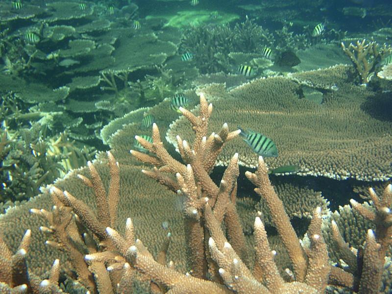 apr 12 0462 sgt major coral