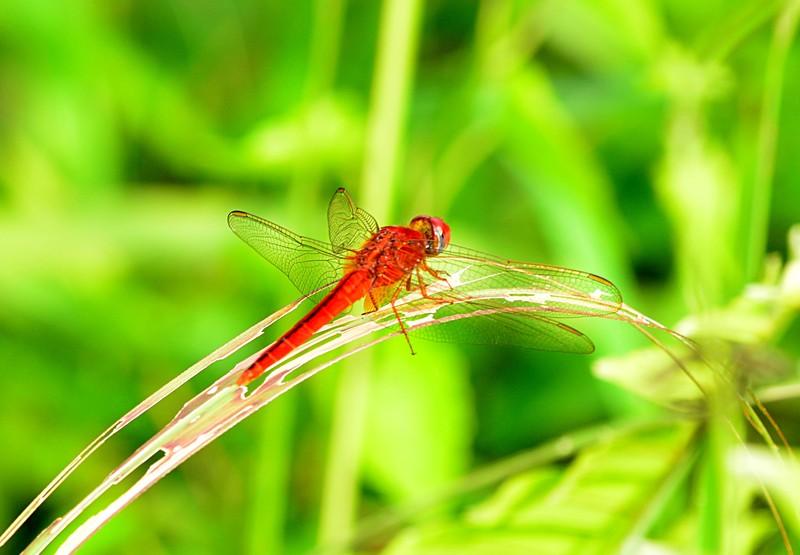 apr 14 0495 dragonfly