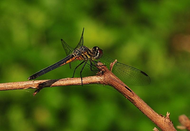 apr 17 4749 dragonfly