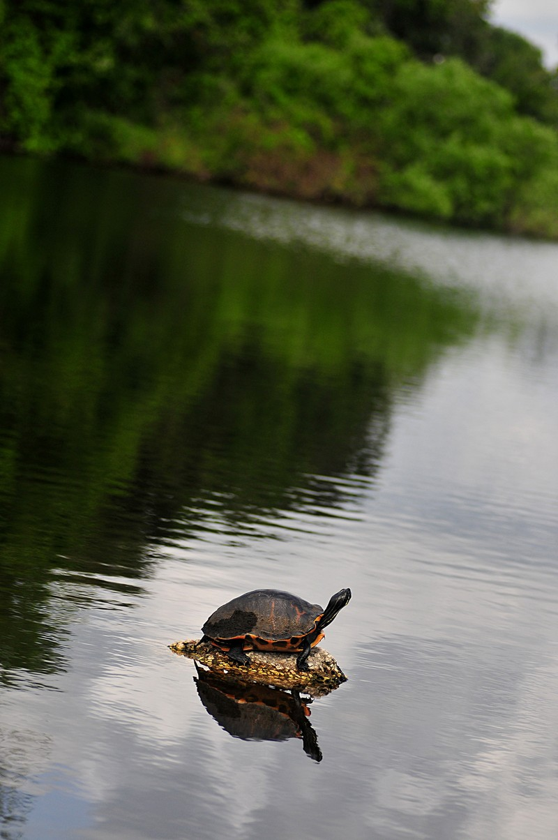 apr 17 4858 turtle f2 8