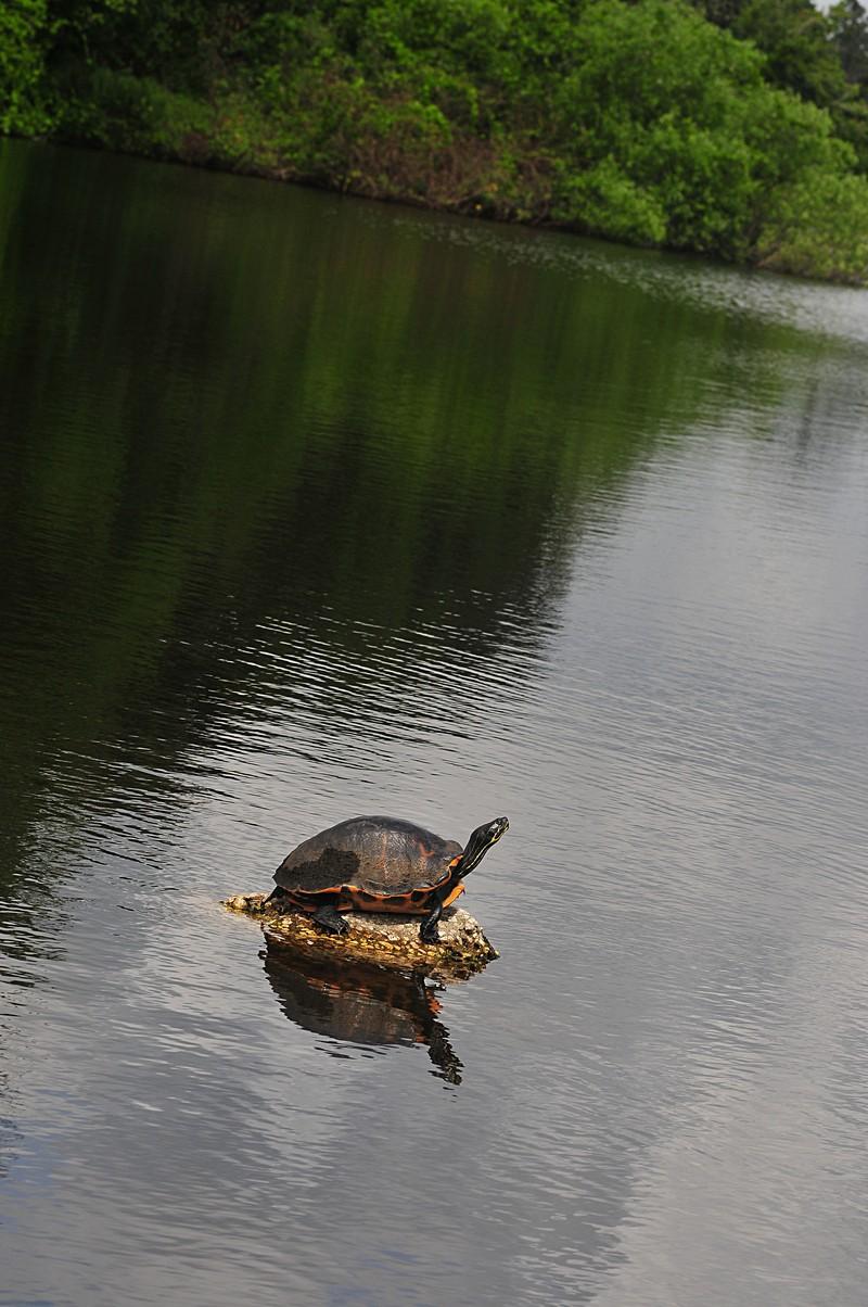 apr 17 4862 turtle f 11