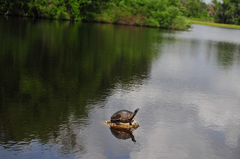 apr 17 4869 turtle f2 8