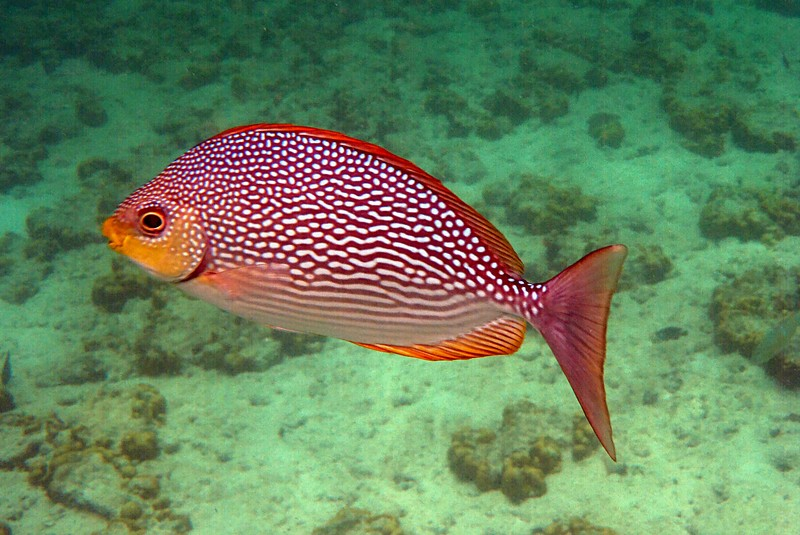 apr 18 0160 spotted fish