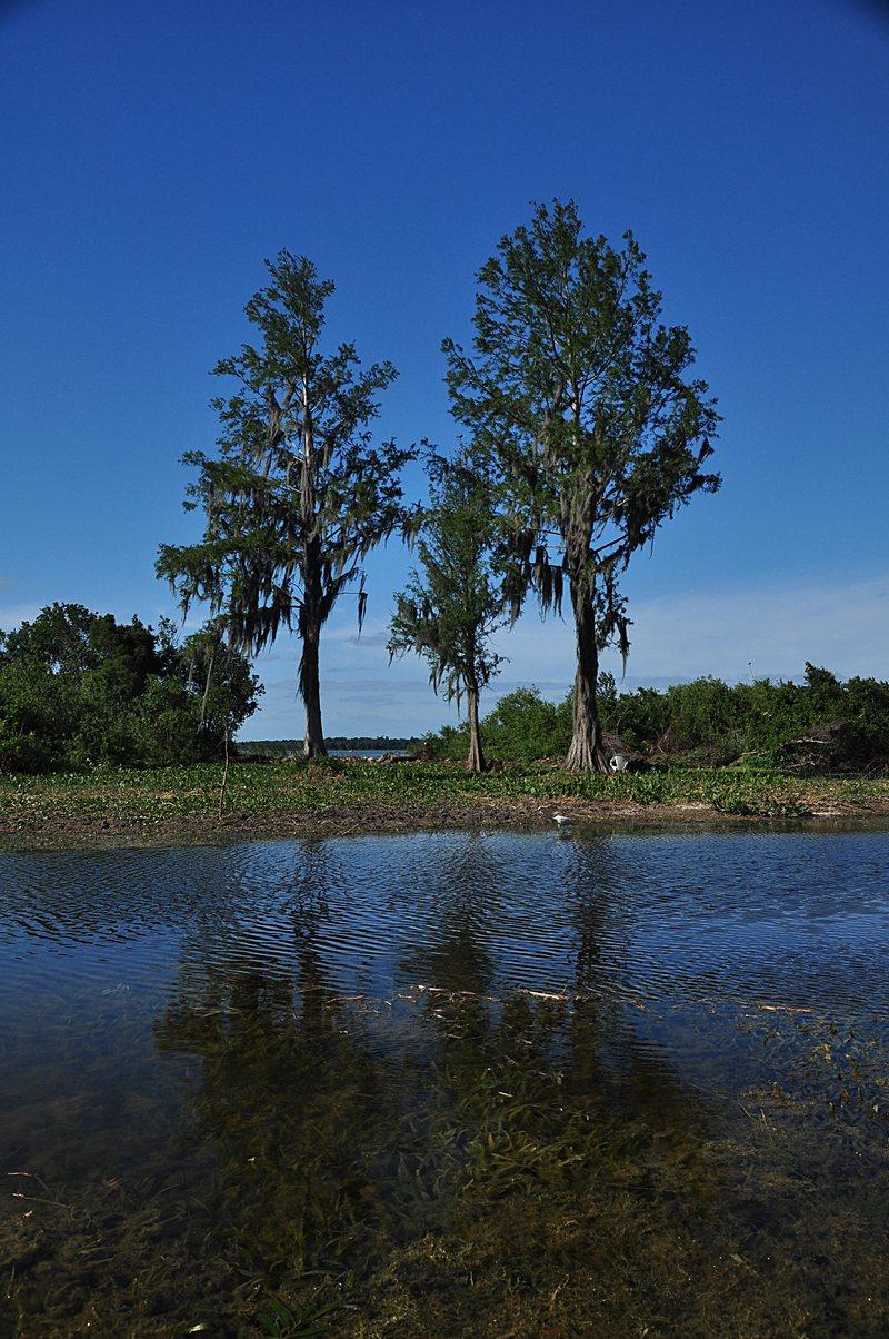 apr 18 0352 3 trees