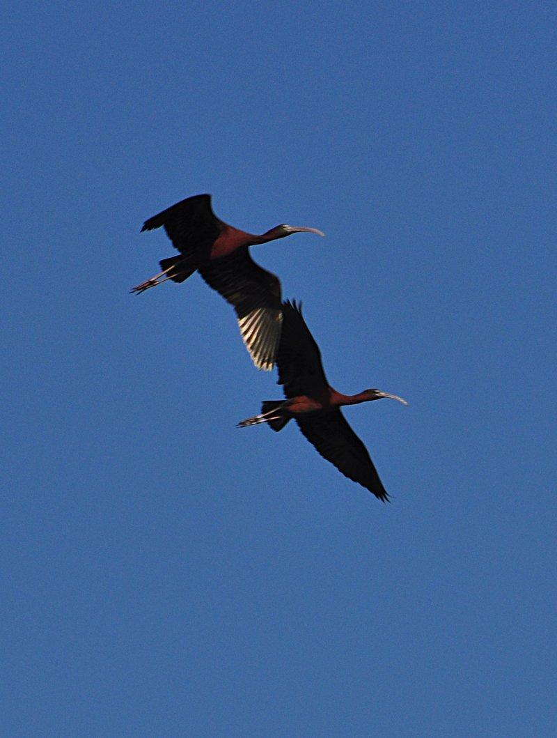 apr 18 0532 2 birds