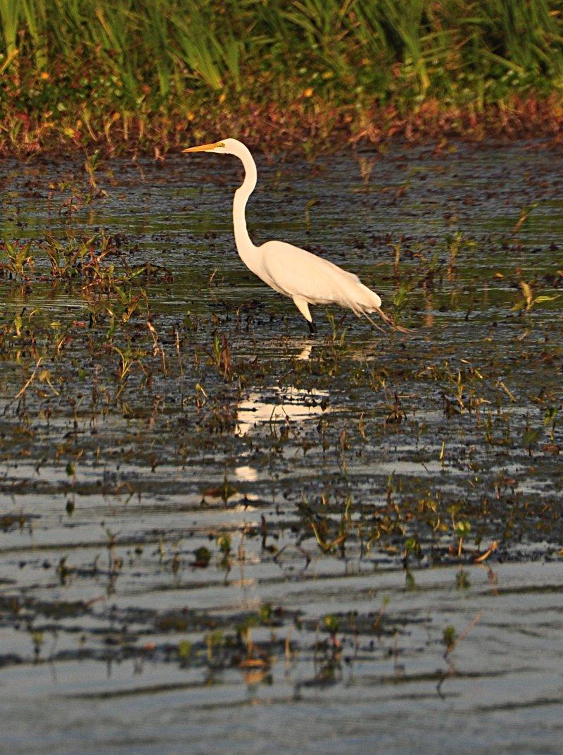 apr 18 0806 white bird