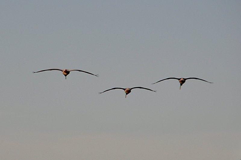 apr 18 0885 trio fly away