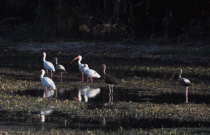 apr 18 0903 birds resting