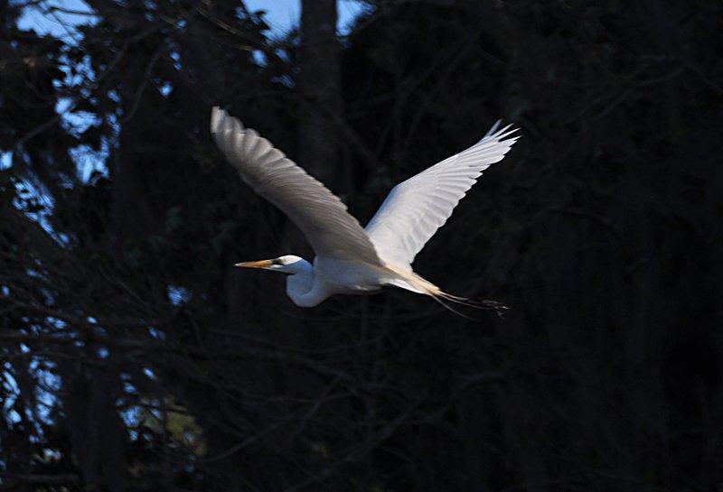 apr 18 0908 white bird