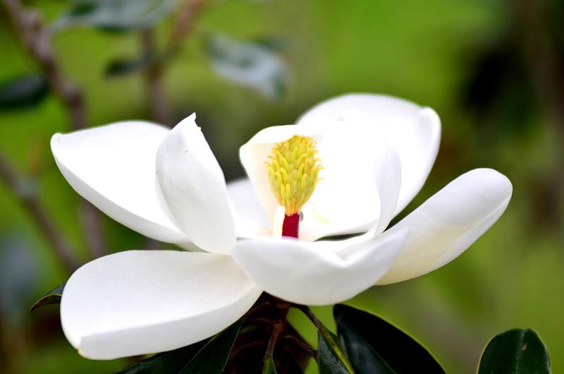 apr 18 3239 magnolia