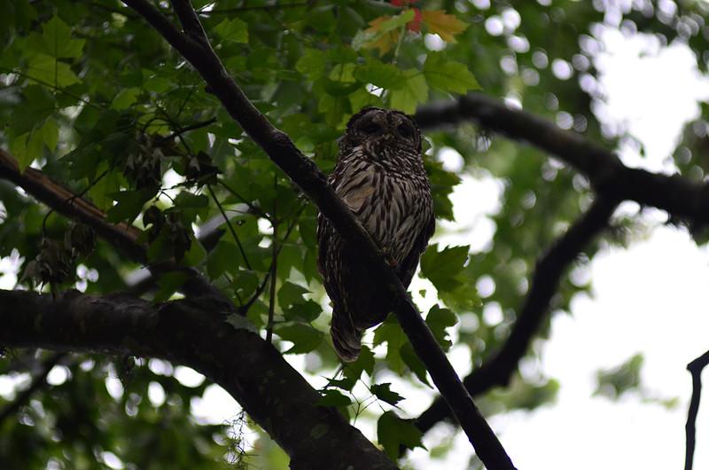 apr 18 3242 wet owl
