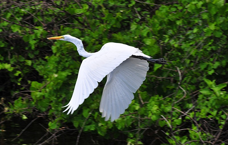 the white heron essay A white heron essay sarah orne jewett this study guide consists of approximately 43 pages of chapter summaries, quotes, character analysis, themes, and more - everything you need to sharpen your knowledge of a white heron.