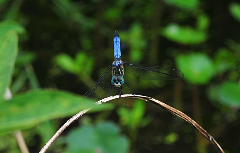 dragonfly essays