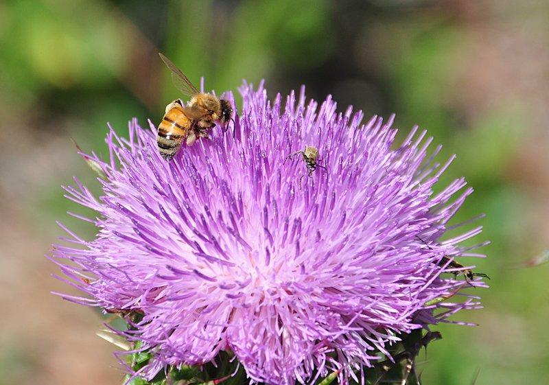 apr 21 1239 purple bee