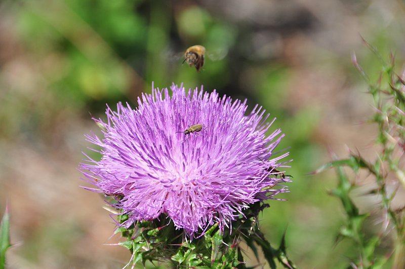 apr 21 1243 bee bug