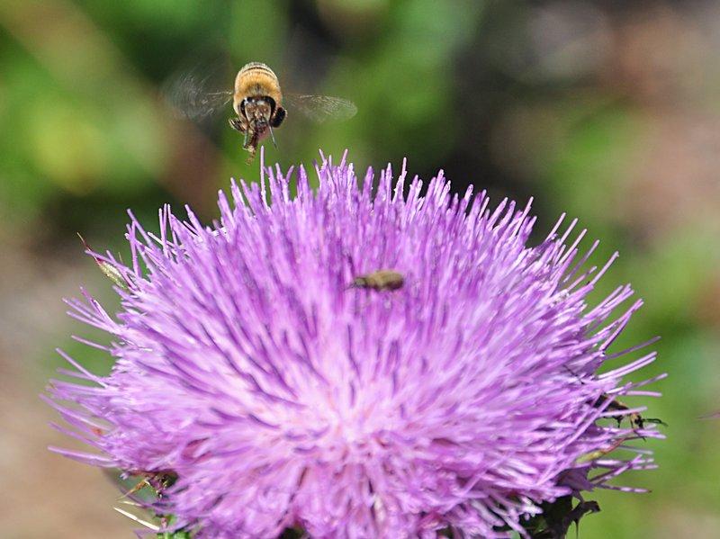 apr 21 1244 flying bee