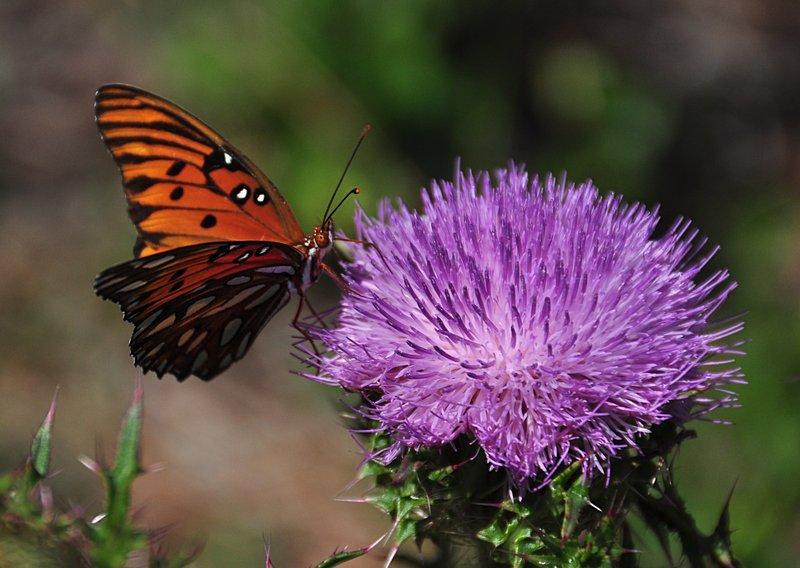 apr 21 1254 butterfly