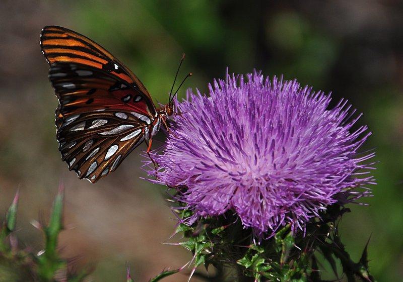 apr 21 1257 butterfly