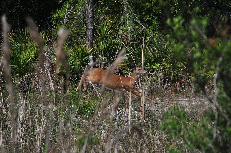 apr 21 1279 deer running