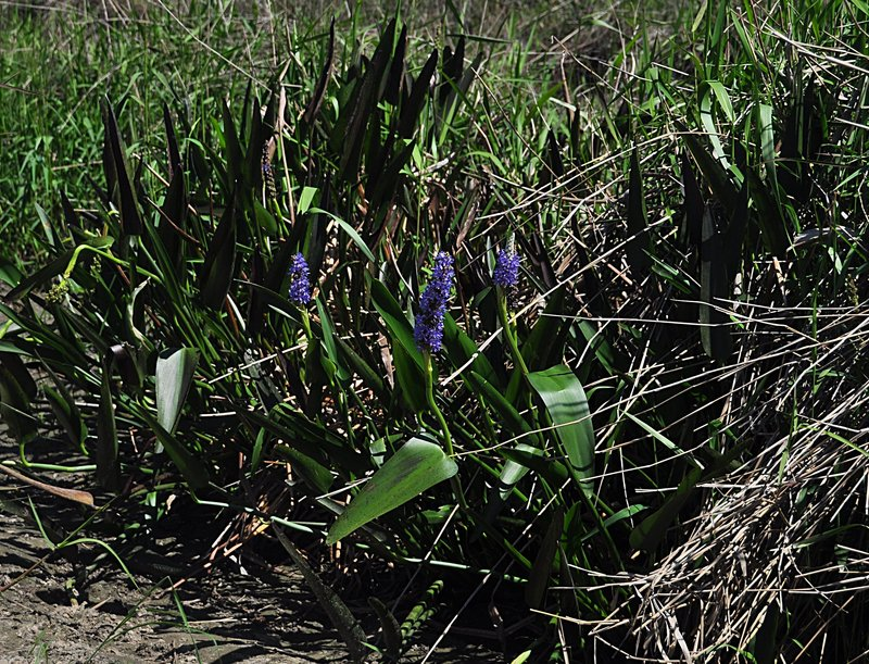 apr 21 1289 purple volunteers