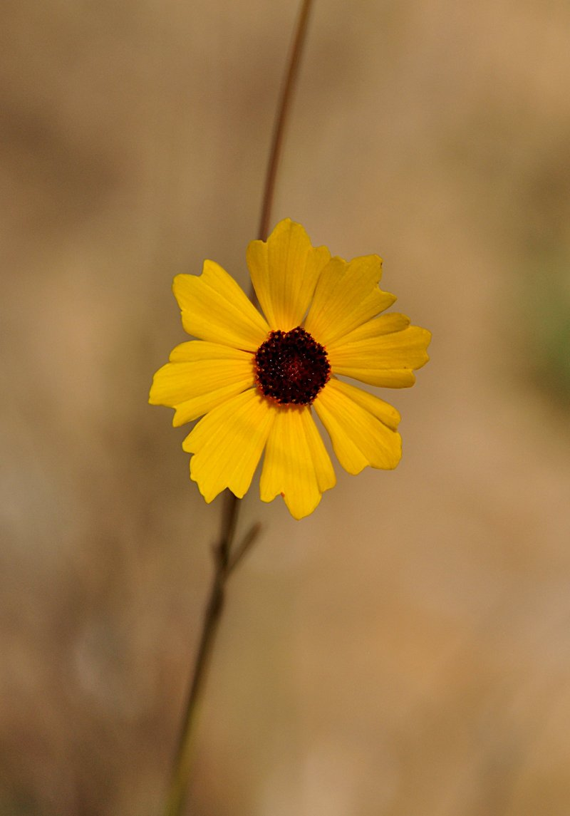 apr 21 1300 yellow flower