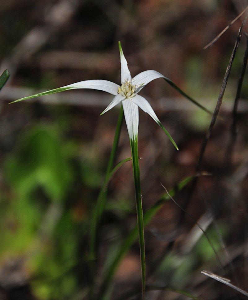 apr 21 1326 white flower