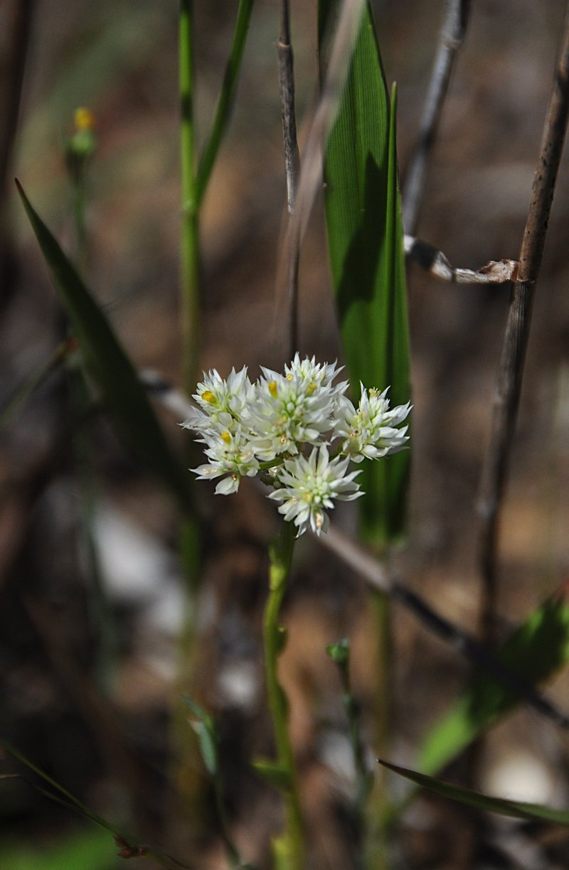 apr 21 1328 white flower