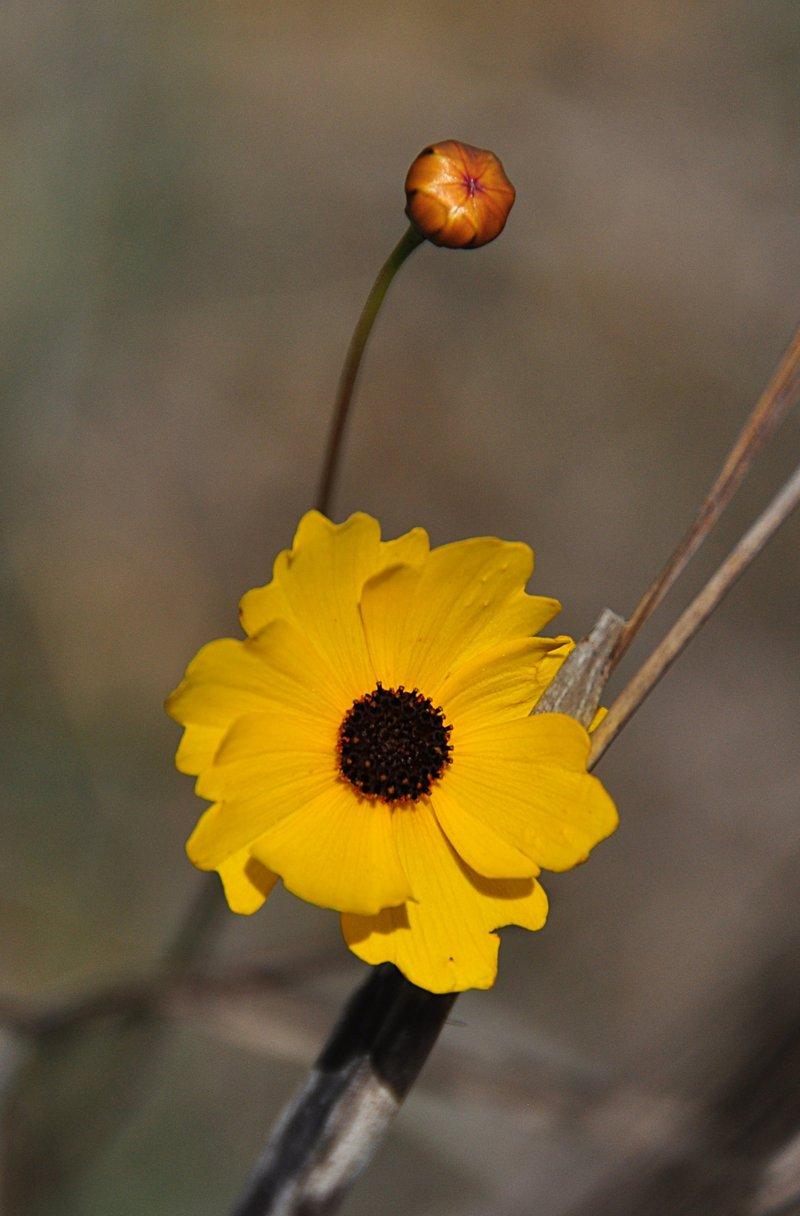 apr 21 1340 yellow flower