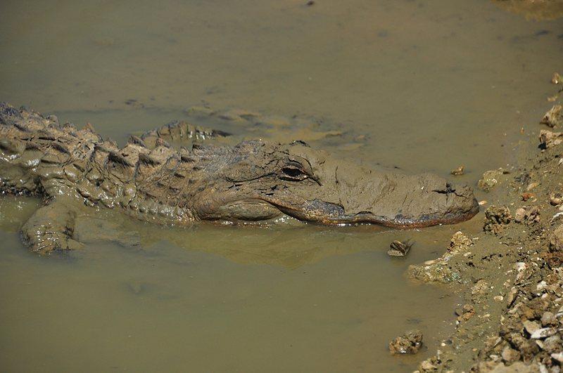 apr 21 1349 gator head
