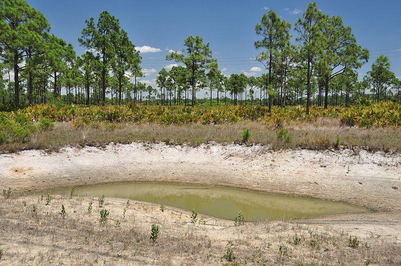 apr 21 1649 alligator pond