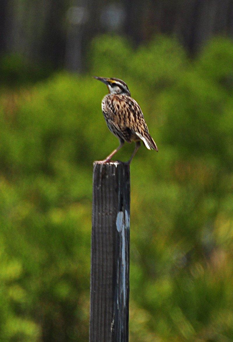 apr 21 1694 bird