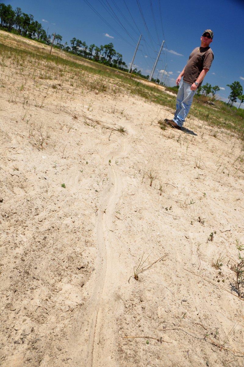 apr 21 1728 alligator tail track