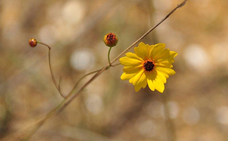 apr 21 1770 yellow flower