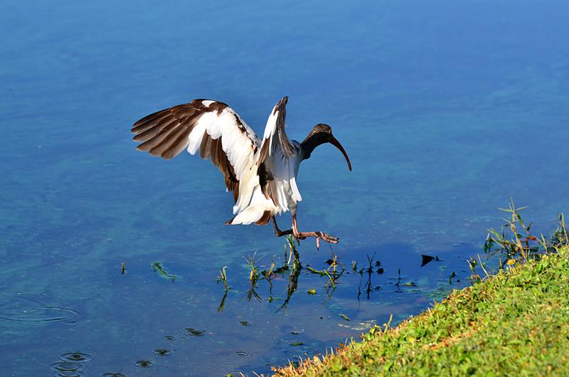 apr 23 3878 ibis takeoff
