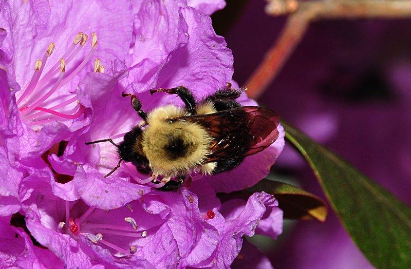 apr 25 2411 bumblebee